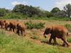 David Sheldrick Wildlife Trust - Nairobi