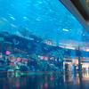 Dubai Aquarium And Under Water Zoo