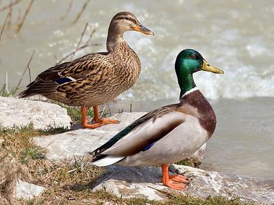 Duna–Ipoly National Park Birdlife - Hungary
