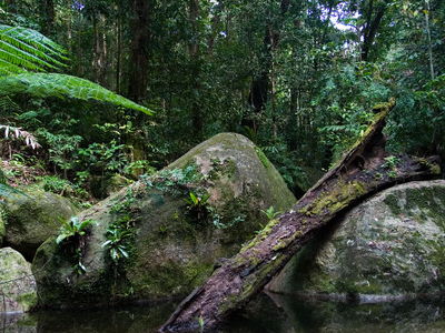 A Rainforest In Daintree National Park