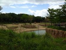 Dallas Zoo Elephants On Savanna