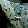 Natural Diamond Crystal In Kimberlite From Finsch Diamond Mine