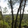 Dibeen Trees