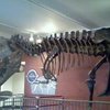 T-Rex Fossil Skeleton In The Building