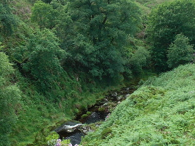 Dodder In The Dublin Mountains