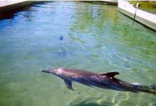 Dolphin At Sea World