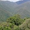 Dorrigo National Park