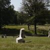 Dred Scott Grave