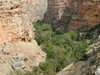 Trapper Canyon - Bighorns