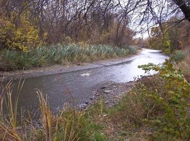 Ecorse River