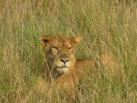 Book Now - Wildlife Safari Queen Elizabeth National Park