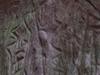 Edakkal Cave Carving