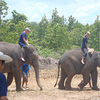 Eddy Elephant Care Chiang Mai