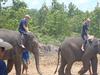 Eddy Elephant  Chiang Mai