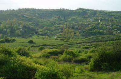 Egerbakta Shagnum Moor-lakes