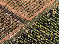 Eger-Tokaj Wine Region Hilly
