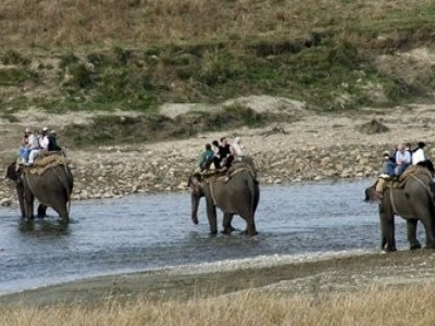 Elephants At Corbett