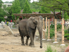 Elephant At Cleveland Metroparks Zoo