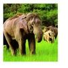 Elephant At Dalma Wildlife Sanctuary