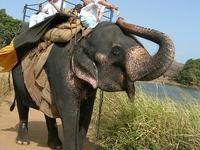 Family Holiday Package Offer Sri Lanka