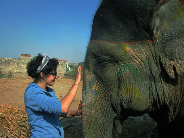 Volunteer Elephants India Photos