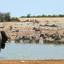 Elephant Counts The Zebras