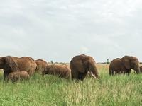 6 Days 5 Nights Lake Manyara, Serengeti And Ngorongoro