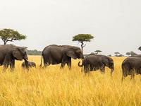 10 Days 9 Nights Kenya - Tanzania Safari Package