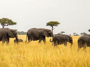 10 Days 9 Nights Kenya - Tanzani -Standard luxury safari package Photos