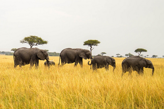 10 Days 9 Nights Kenya - Tanzania Safari Package Photos