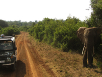 Wildlife Safari at Tsavo East and West National Park