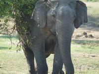 UNESCO Heritage Sites & Wildlife Safari In Sri Lanka