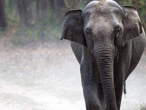 Corbett Elephant Pack