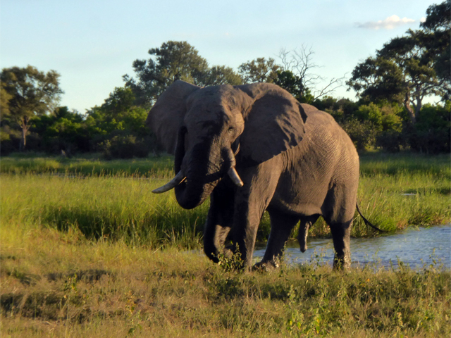 Best of Botswana - The best safari in Africa Photos