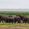 2 Days Great Amboseli Safari