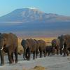 Porini Kenya Experience 5 días