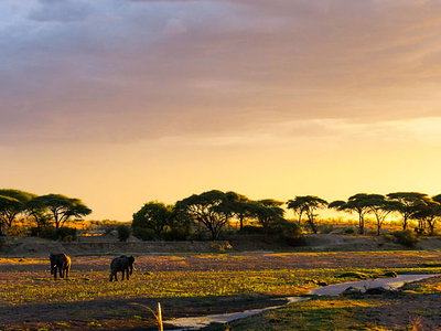 Elephants At Sunset, Ruaha National Park
