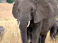 Safari Tanzania - Northern Circuit