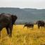 Elephants Mara
