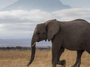 Kenya Grand Safari Photos