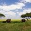 Tarangire Safari Package