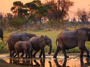 1 Day Moremi Wildlife Reserve Experience Photos