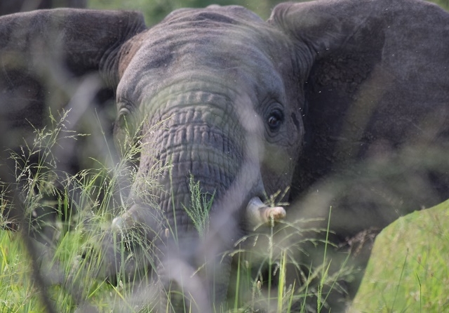 Wildlife Short Lodge Safari - Tanzania Photos