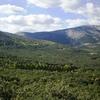 El Herrería Forest