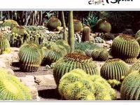 El Huerto del Cura Garden