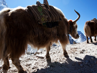 Nepal Travel Activities