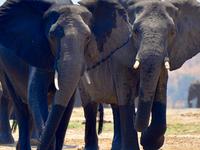 Okavango Delta and Moremi Game Reserve
