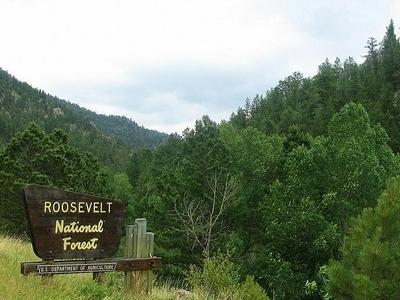 Entrance To Roosevelt National Forest