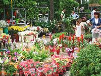 Ethnobotanical and Botanical Garden Museum