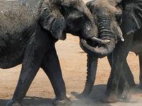 2 Days Etosha Wildlife Safari Namibia - Camping